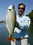Image of Brycon orthotaenia